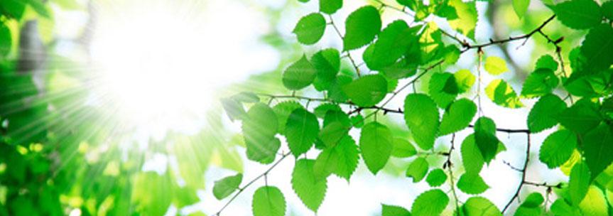 自然エネルギー<育成光線>