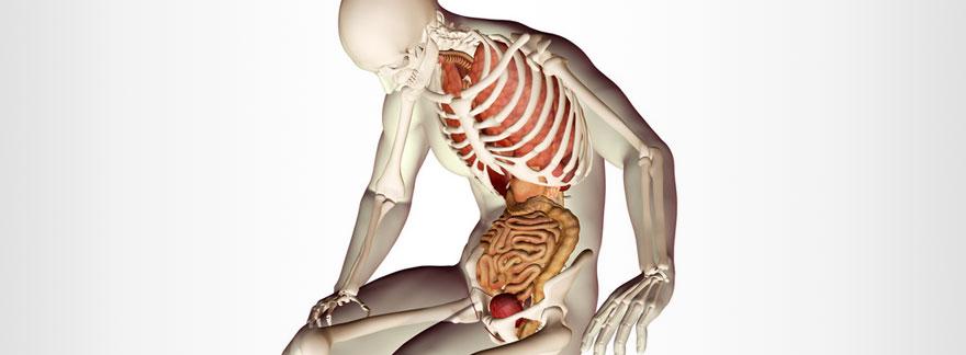 過食によって下垂した内臓の重み。